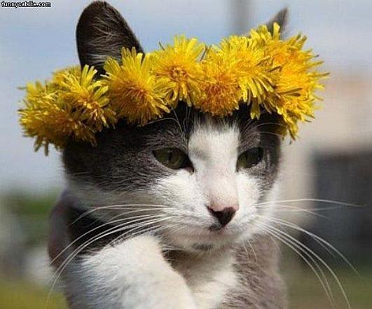 симпатичные кошки