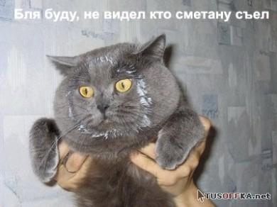 Забавные животные. Коты и кошки.