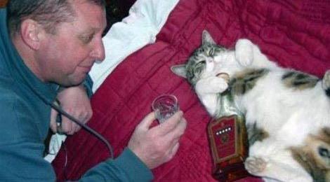 Забавные коты и кошки.