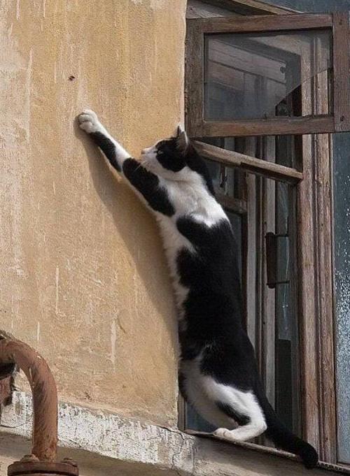 Забавные животные, коты и кошки