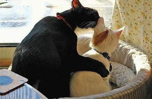 http://top10best.ucoz.ru/Cats2/cat_8_1.jpg