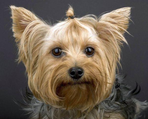 собаки, портреты