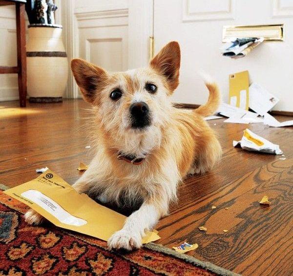 Собаки. Письмо.