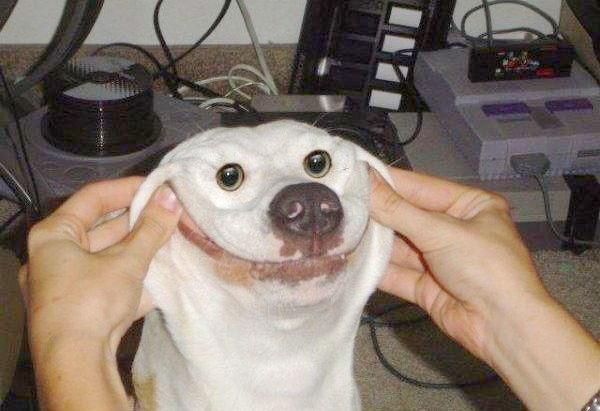 Счастливая собака.