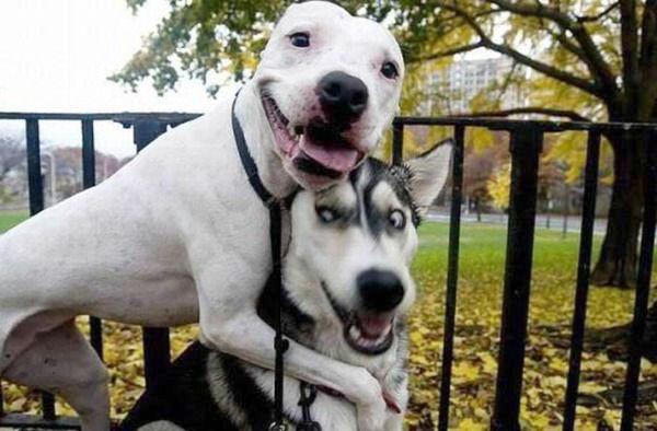 Эмоции. Собаки.