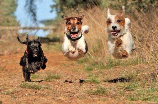 Собаки. Свободный полет.
