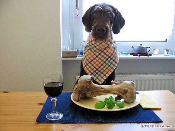 Собачий ужин