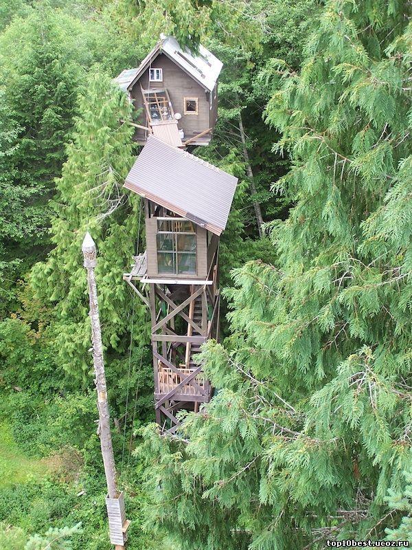 Дом на кедре