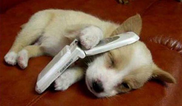 щенкок с телефоном