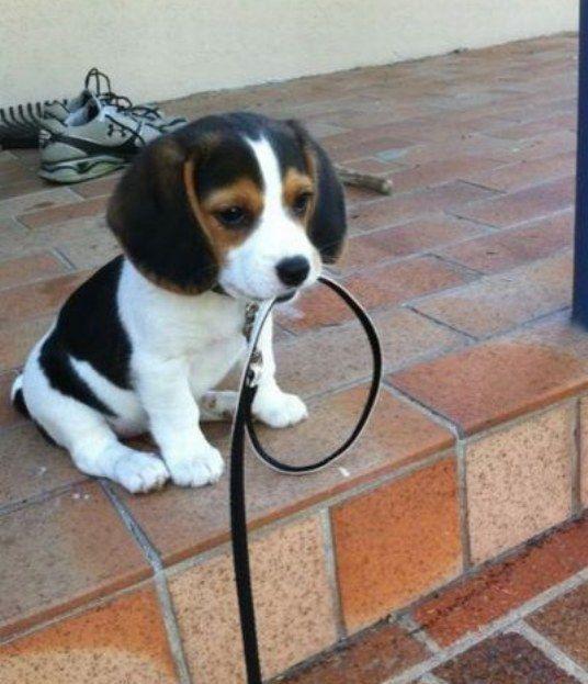 хочу гулять