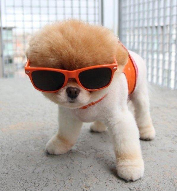 крутой щенок
